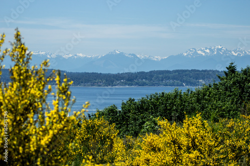 Photo  Flowery View of Elliott Bay from Discovery Park