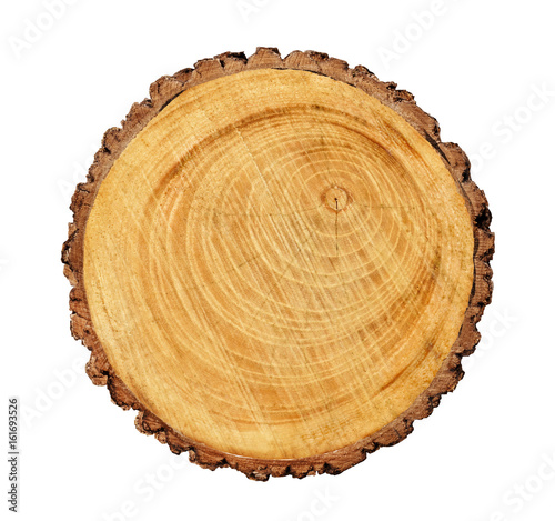Photo Stands Wood Large circular piece of wood cross section with tree ring texture pattern and cracks isolated on white background.
