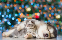 Kitten And Puppy On A Background Of The Christmas Tree