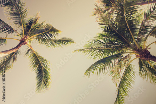 Foto auf AluDibond Palms Coconut palm trees, looking up angle