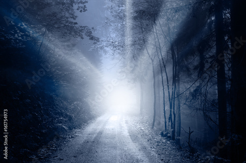 Keuken foto achterwand Industrial geb. Blurred foggy magical sun rays in forest road. Lovely blue color filter used.