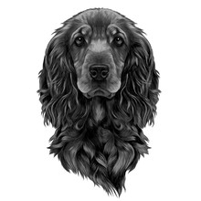 Dog Breed Cocker Spaniel Muzzl...