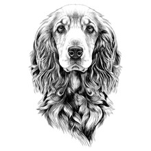 Dog Breed Cocker Spaniel Muzzl...