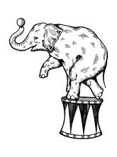 Circus Elephant Engraving Vector