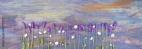 Poster Panoramafoto s Lavendel auf Holzuntergrund - Panorama