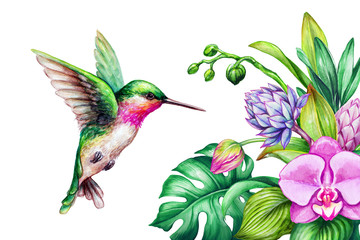Panel Szklany Storczyki watercolor illustration, exotic nature, flying humming bird, tropical orchid flower, green leaves, isolated on white background