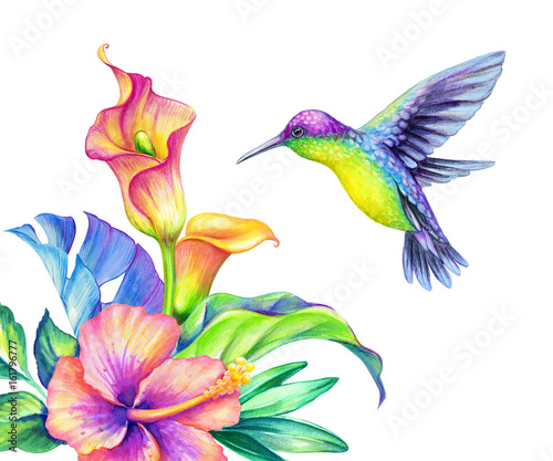 Photo Stands Iris watercolor illustration, exotic nature, flying humming bird, tropical calla lily flowers, green jungle leaves, isolated on white background