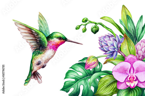 watercolor illustration, exotic nature, flying humming bird, tropical orchid flo Tableau sur Toile