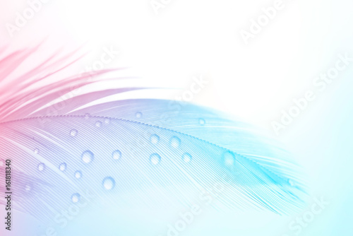 Photo  Background gentle airy texture of light feather with water drops macro