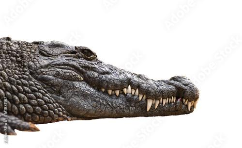 Nile crocodile Crocodylus niloticus, close-up detail of teeth with blood of the Nile crocodile open eye, Sharpened teeth of dangerous predator, isolated white background