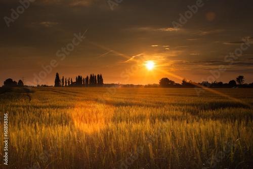 Fototapeta Sonnenuntergang im Kornfeld