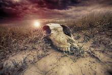 Animal Skull In The Desert Aga...