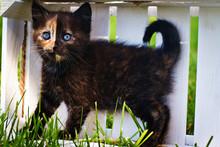 Funny Black Cat In White Box.