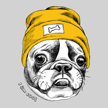 Portrait Of French Bulldog In A Yellow Hipster Hat. Vector Illustration.