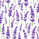 Bezszwowy wzór Provence fiołkowa lawenda kwitnie na białym tle. Ilustracji wektorowych. - 161882931