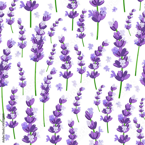 Stampa su Tela Seamless pattern of provence violet lavender flowers on a white background