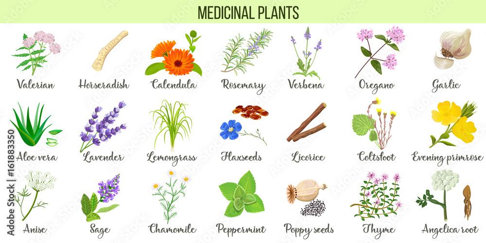 Photo  Big vector set of medicinal plants