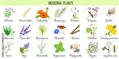 Photo  Big vector set of medicinal plants