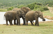 Family of elephants standing at a water hole