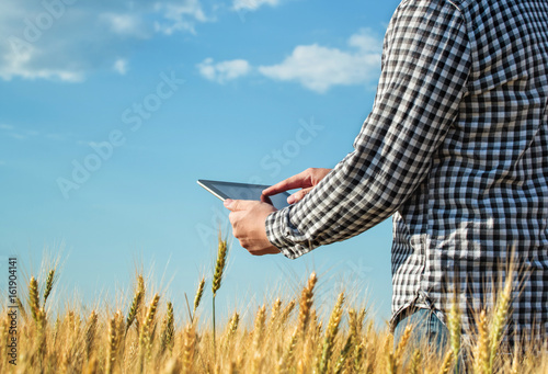 Fototapeta Businessman is on a field of ripe wheat and is holding a Tablet computer. The concept of the agricultural business. obraz