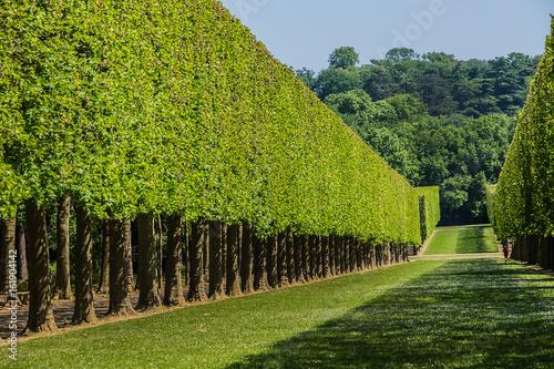 Beautiful public Park de Sceaux was designed by Andre Le Notre (XVII century) at request of Colbert Canvas Print