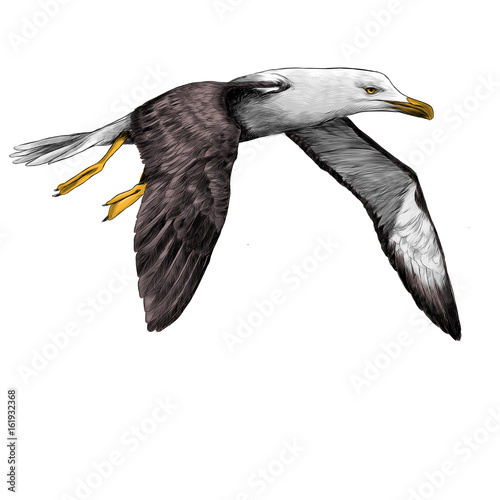 Valokuvatapetti Seagull Albatross bird in flight with open wings sketch vector graphics color pi