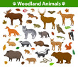 Woodland forest animals collection including deer, bear, owl, wild boar, lynx, squirrel, woodpecker, badger, beaver, skunk, hedgehog
