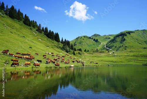 Photo Stands Lake Les vaches de Joux-Plane