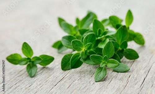 Thyme fresh herb.