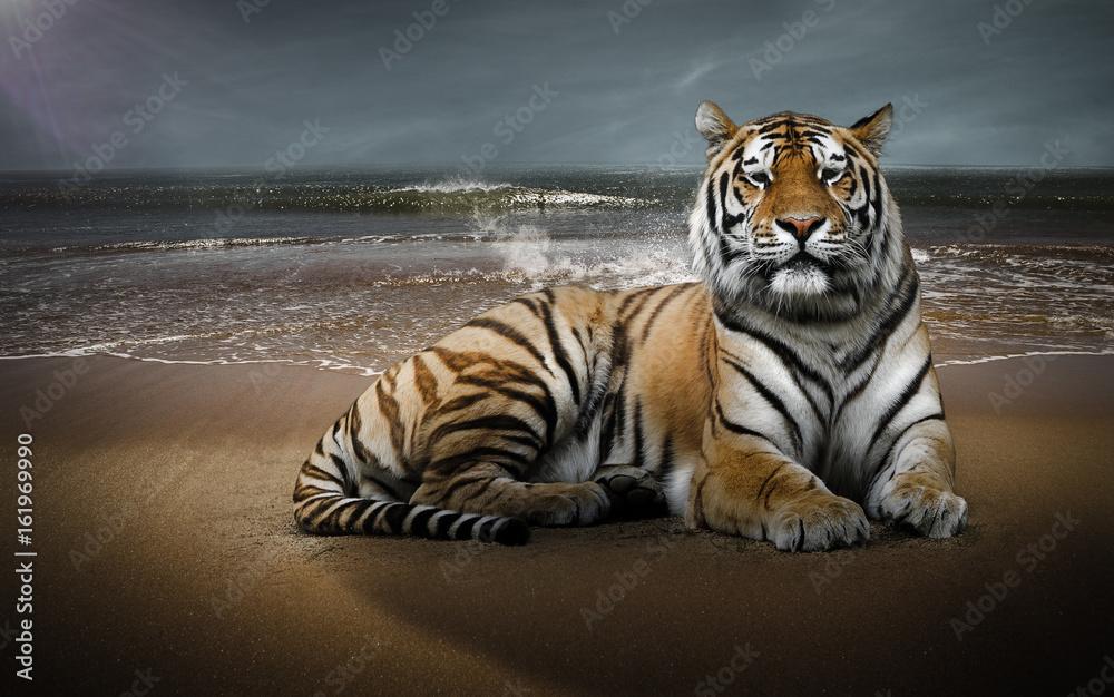 Tigre sur une plage