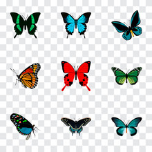Realistic Pipevine, Beauty Fly, Sangaris And Other Vector Elements. Set Of Beauty Realistic Symbols Also Includes Green, Butterfly, Tropical Objects.