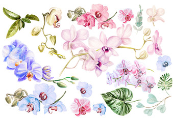 Panel Szklany Egzotyczne Beautiful watercolor set with orchids. Illustration