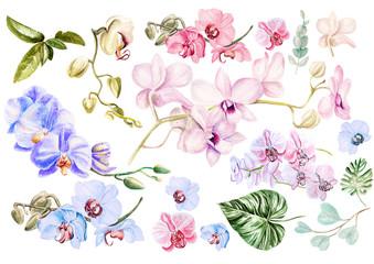 Naklejka Egzotyczne Beautiful watercolor set with orchids. Illustration