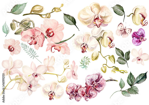 Valokuva Beautiful watercolor set with orchids. Illustration