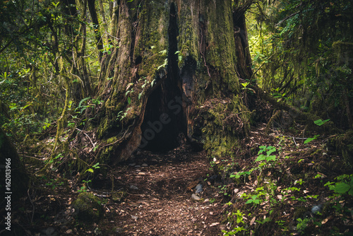 Fotografija  Forest trail leading to an old tree trunk.