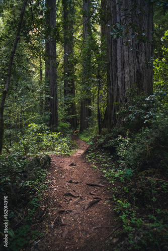 Poster Diepbruine Lush forest hiking path.