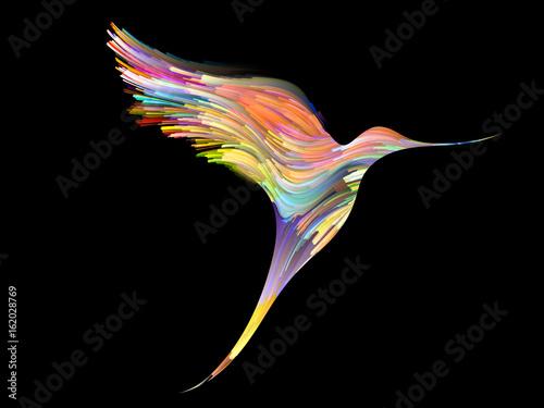 piekny-kolorowy-ptak-na-czarnym-tle