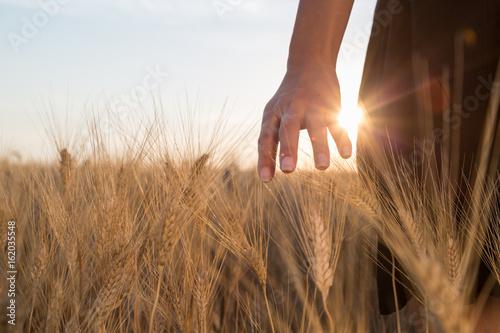 Obraz na plátně  Ragazza sta accarezzando delle spighe di grano in un campo al tramonto