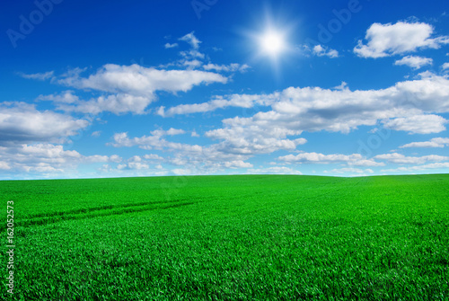 Deurstickers Groene Image of green grass field and bright blue sky