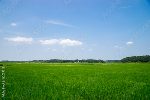 Aluminium Prints Landscapes 田園風景