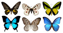 Set Of Six Butterfly Isolated ...