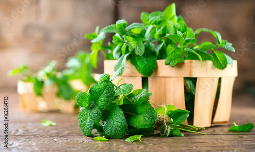 Fototapeta Mint. Bunch of fresh green organic mint leaf on wooden table closeup obraz na płótnie
