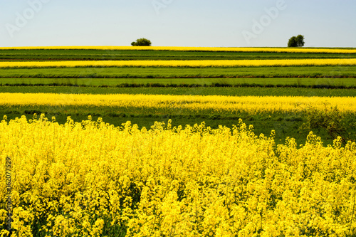 Poster Oranje Landscape with rape flowers and blue sky