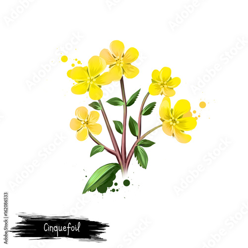 Photo Digital art illustration of Cinquefoil isolated on white