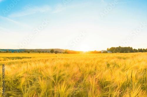Fotobehang Cultuur Golden rye field