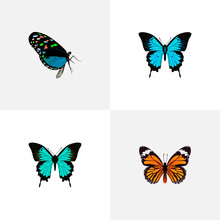 Realistic Papilio Ulysses, Monarch, Copper And Other Vector Elements. Set Of Beauty Realistic Symbols Also Includes Bluewing, Monarch, Hairstreak Objects.