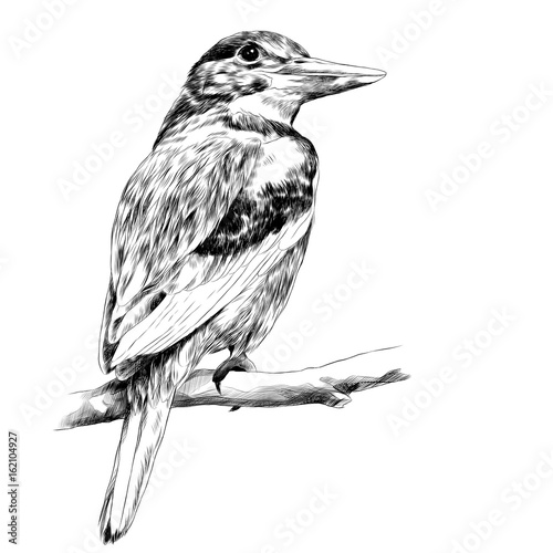 Fotografie, Tablou Alcyone bird sitting on a branch sketch vector graphics black and white drawing