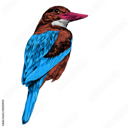 bird Alcyone sketch vector graphics color picture Tablou Canvas
