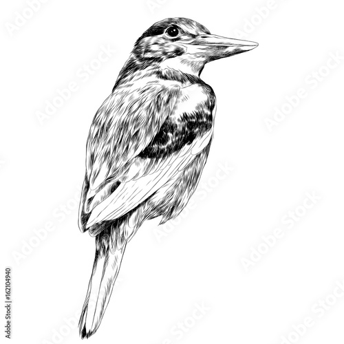 Fotografie, Tablou bird Alcyone sketch vector graphics black and white drawing