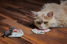 Maine Coon Cat And A Mouse Pla...